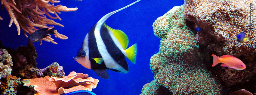 Fish Tropical Swimming  Facebook Cover