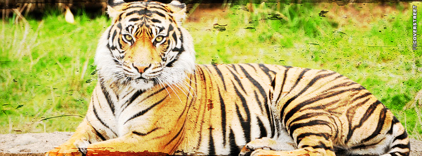Tiger Sitting Grunge  Facebook cover