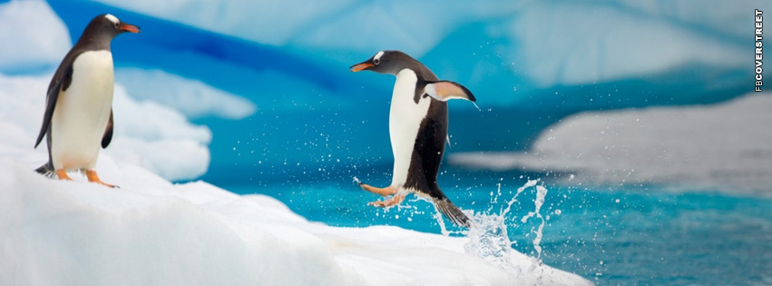 Penguin Jumping Facebook cover