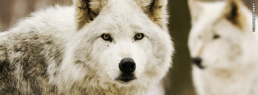 Wolves White Facebook cover