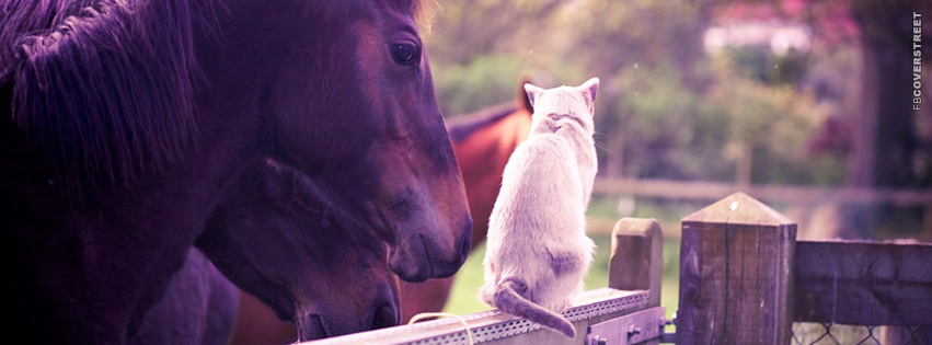 Cat and a Horse  Facebook Cover