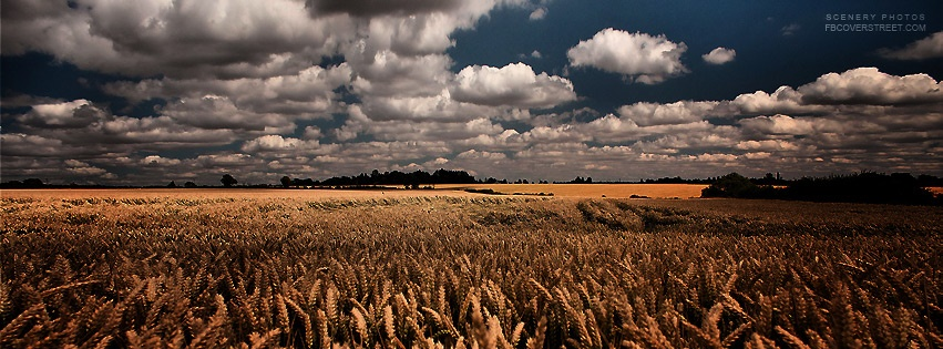 Huge Wheat Field & Dark Weather Facebook cover