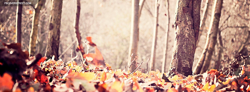 Fallen Leaves Facebook cover