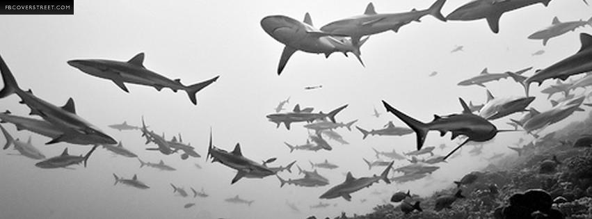 Dun Dun Dun Swimming Sharks  Facebook cover