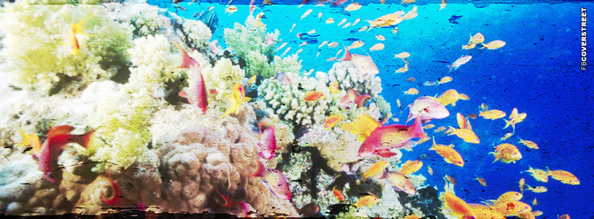 Coral Reef Photo  Facebook Cover