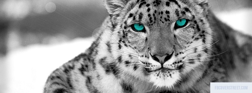 Snow Leopard Facebook Cover