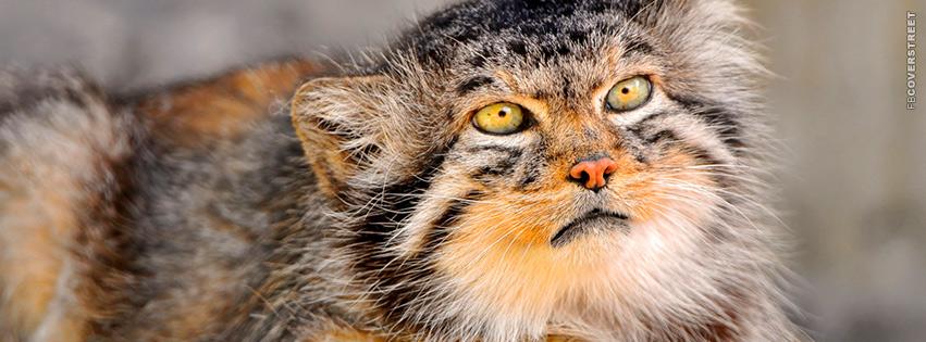 Wild Cat Dog Monkey Lemur Thing  Facebook Cover