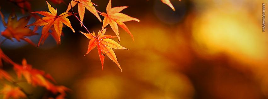 Orange Autumn Leaves  Facebook cover