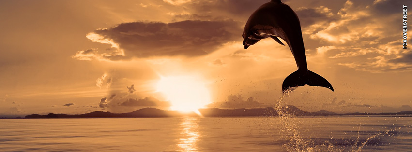Dolphin Jumping Out of The Water  Facebook cover