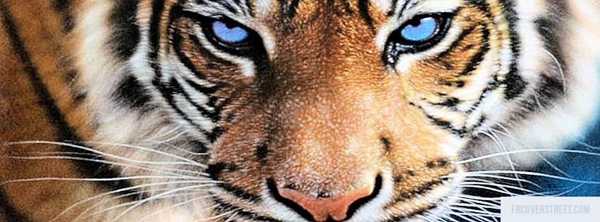Tiger 5 Facebook Cover
