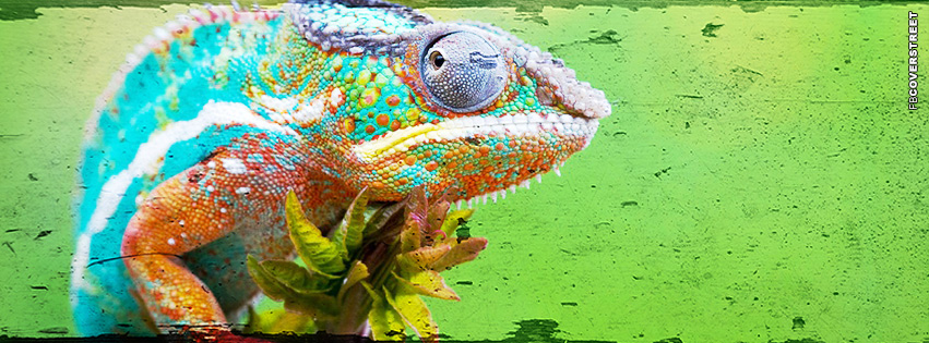 Lizard Looks Photoshopped Grunge  Facebook cover