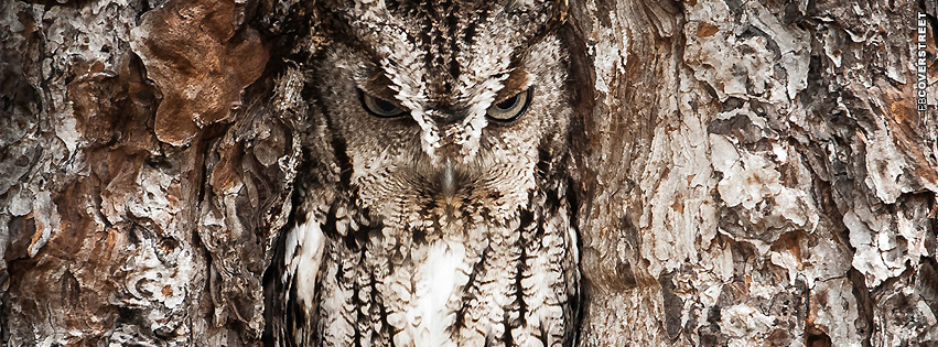 Camoflauge Owl  Facebook Cover