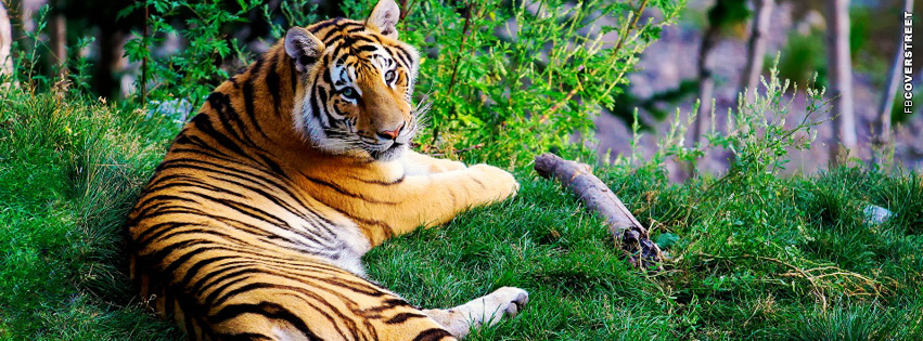 Tiger Resting Facebook cover