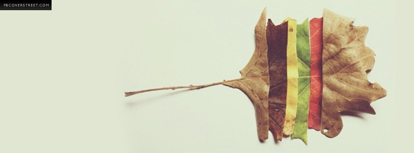 Fall Autumn Leaf Changes  Facebook cover