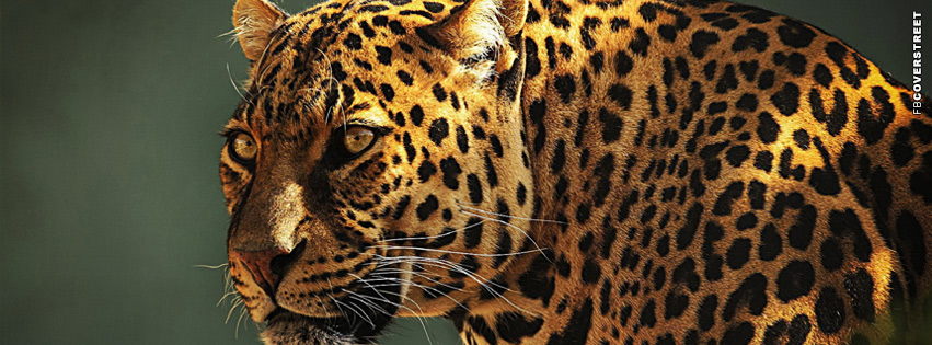 Old Leopard Facebook cover
