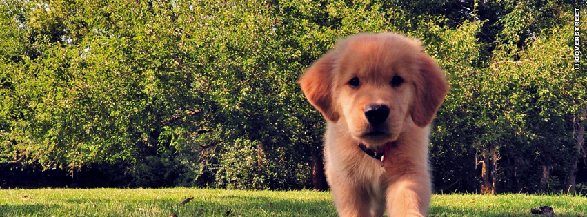 Puppy Cute Facebook cover