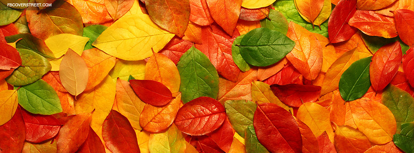 Autumn Colorful Leaves Facebook Cover