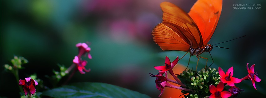 Orange Butterfly Pink Flowers Facebook Cover