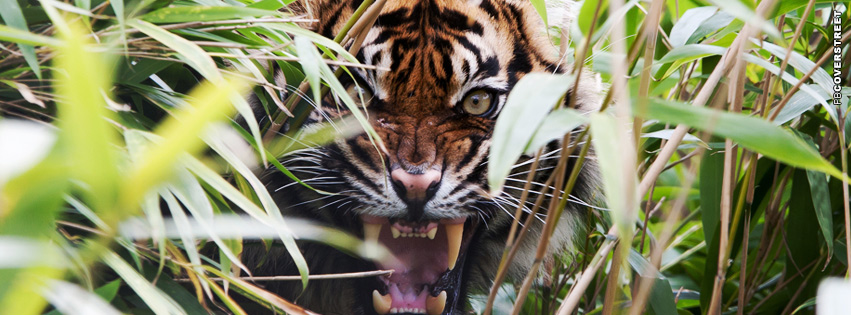 Angry Tiger Facebook cover