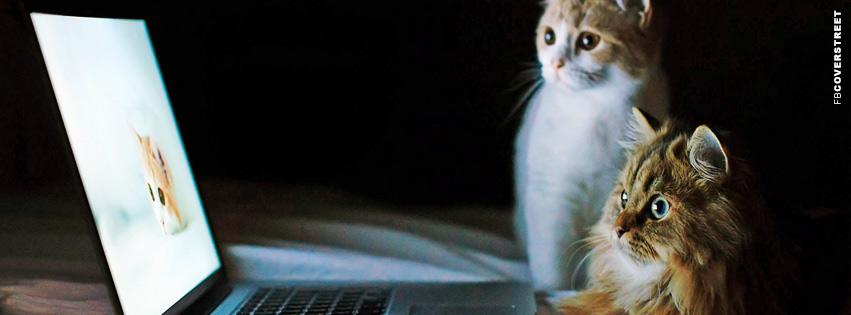 Cats Looking At Cats  Facebook cover