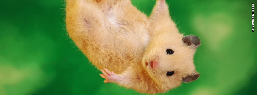 Hanging Hamster Facebook cover