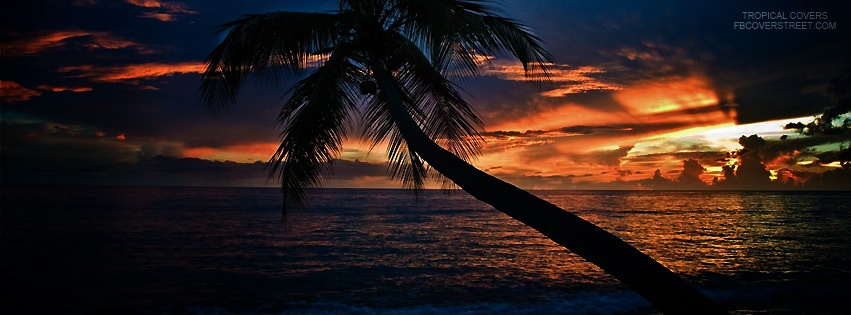 Tropical Sunset Palm Tree Facebook Cover