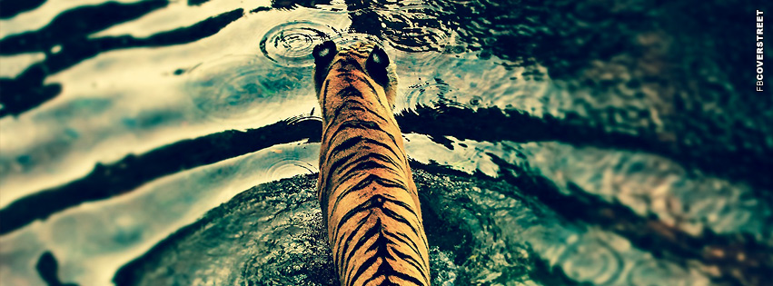 Tiger In Water  Facebook cover