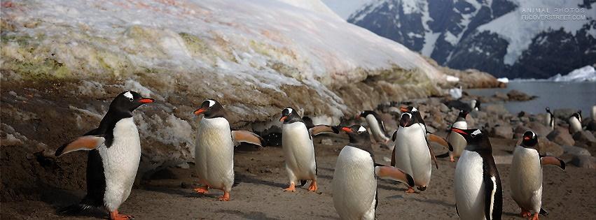 Penguins Facebook Cover