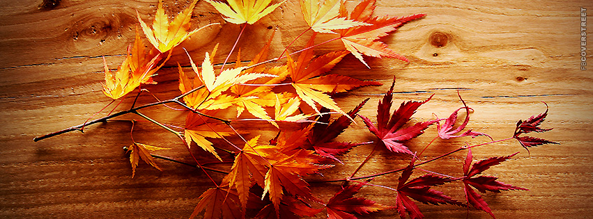 Fall Leaves Colorful  Facebook Cover