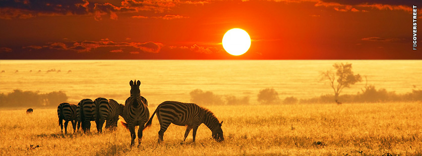 Zebra Herd over Horizon  Facebook cover