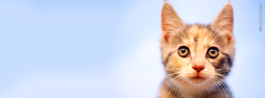 Cute Gazing Kitten  Facebook cover