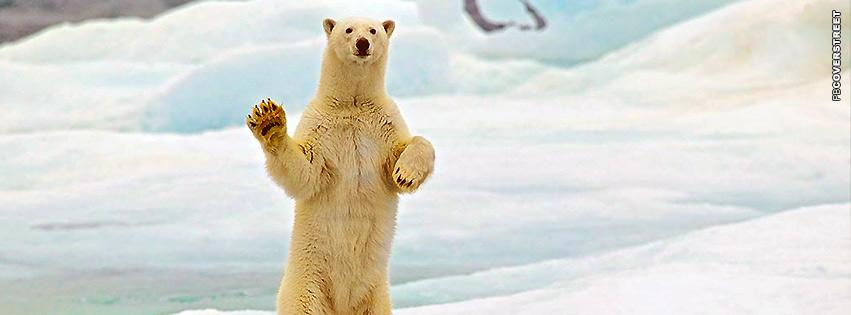 Polar Bear Waving  Facebook cover