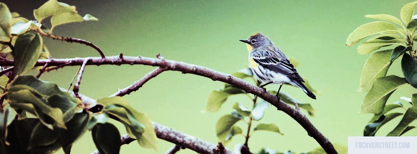 Pirched Bird Facebook Cover