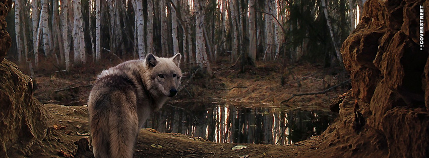 Wolf Lonely Wolf  Facebook Cover