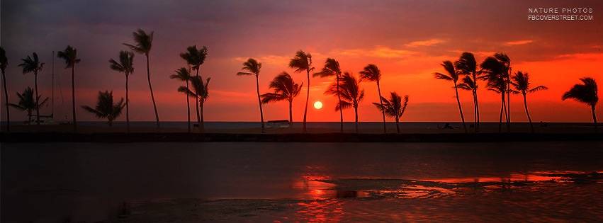 Sunset Palm Trees Blowing In The Wind Facebook Cover