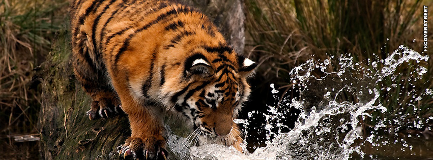 Tiger Playing In Water  Facebook cover
