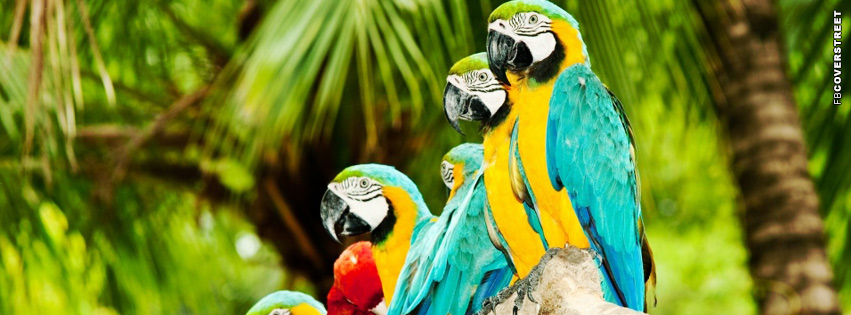 Blue and Gold Macaws  Facebook cover