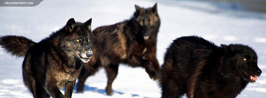 Pack of Running Wolves Facebook Cover