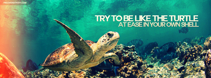Try To Be Like The Turtle Quote Facebook Cover
