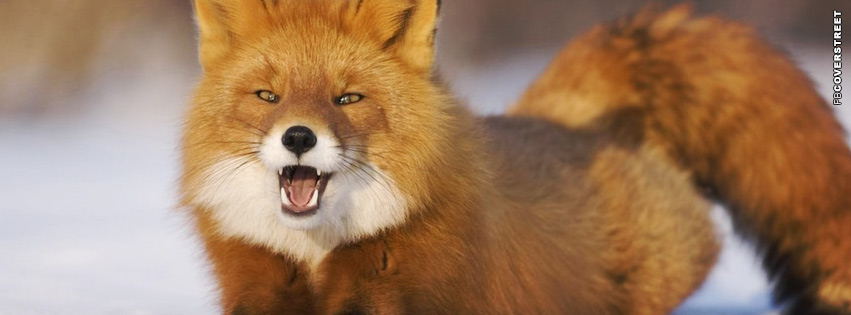 Angry Fox Facebook cover