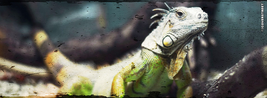 Lizard Armenia  Facebook Cover