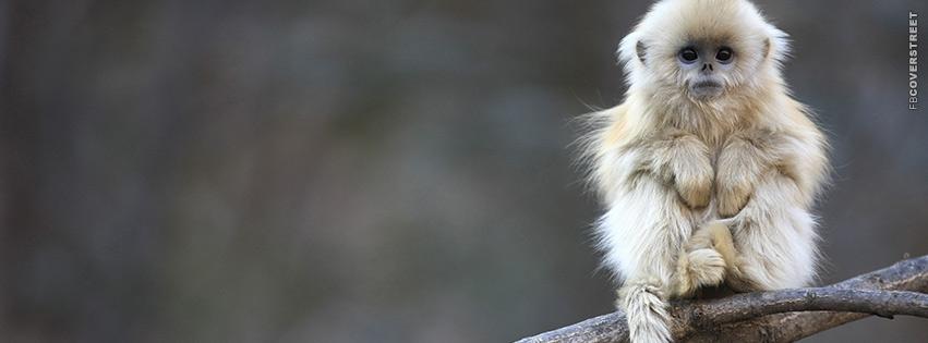 Cute Monkey  Facebook cover