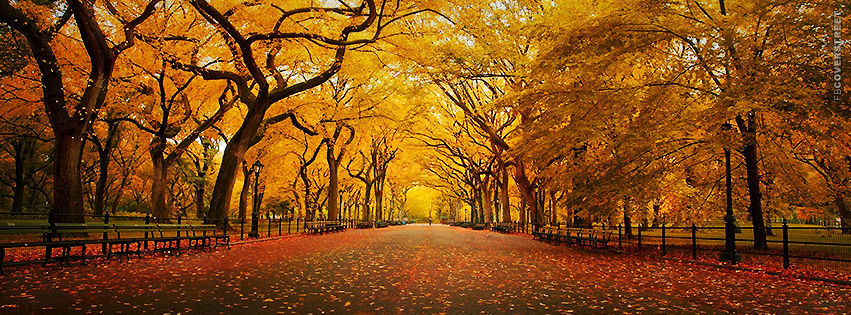 Beautiful Autumn Park  Facebook Cover