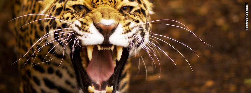 Jaguar Roaring  Facebook cover