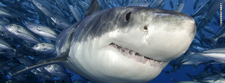 Shark Great White Swimming  Facebook cover