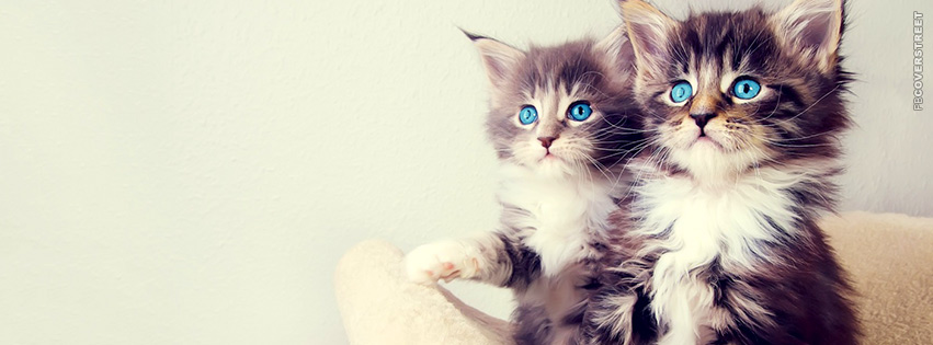 Cute Blue Eyed Kittens  Facebook Cover