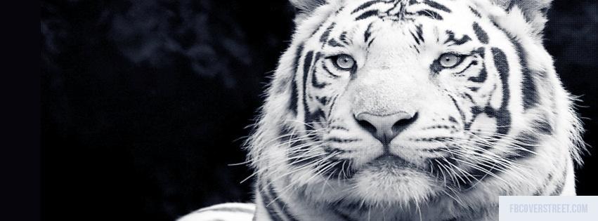 White Tiger Facebook Cover