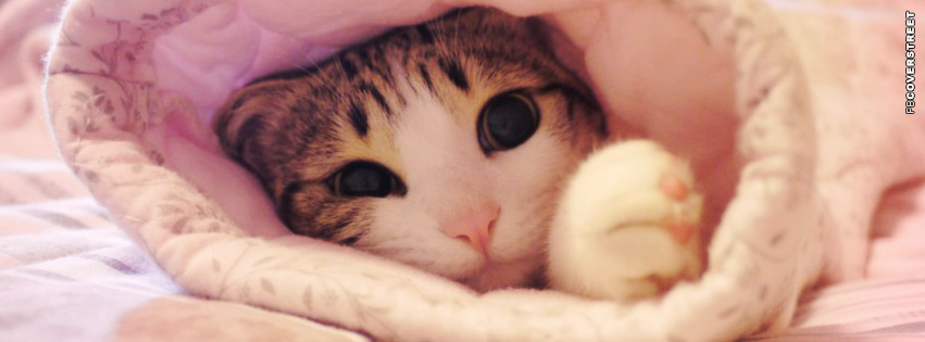 Cat Wrapped In a Blanket Facebook cover