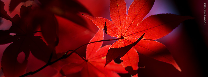 Red Fall Leaves  Facebook cover