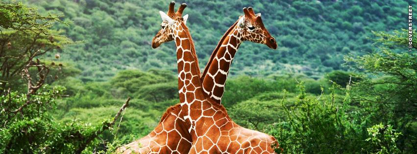 Giraffes Africa  Facebook cover
